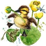 Милый маленький утенок предпосылка акварели лилии желтой воды Стоковая Фотография RF