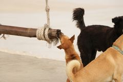 Милый маленький щенок жуя logon пляж стоковые фото