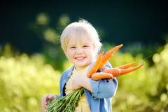 Милый мальчик держа пук свежих органических морковей в отечественном саде стоковые изображения rf