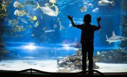 Милый мальчик наблюдает рыб в аквариуме Стоковые Фотографии RF