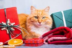 Милый меховой красный кот с украшением рождества на связанной шотландке Стоковые Фотографии RF