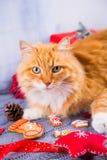 Милый меховой красный кот с украшением рождества на связанной шотландке Стоковые Изображения