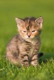 милый мечтая котенок Стоковое Фото