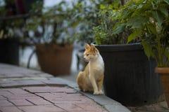 Милый одичалый кот сидит в улице стоковые фотографии rf