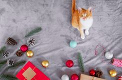 Милый оранжевый котенок смотрит вверх и сидящ на сером ковре в празднике рождества с украшением и орнаментом стоковое фото