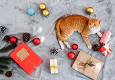Милый оранжевый котенок смотрит вверх и сидящ на сером ковре в празднике рождества с украшением и орнаментом стоковые фотографии rf