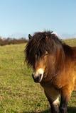 милый пони лошади стоковое изображение rf