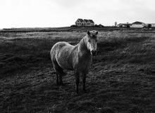 Милый пони стоя в поле стоковое фото