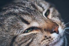 Милый портрет кота спать Стоковая Фотография