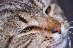 Милый портрет кота спать Стоковые Изображения