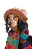 милый портрет шлема собаки Стоковые Изображения