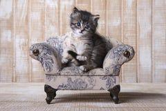 Милый прелестный котенок совершенный для календаря Стоковая Фотография RF