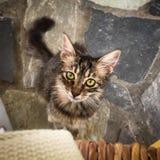 Милый признавая взгляд от зеленого цвета наблюдал котенок Стоковая Фотография