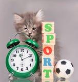 Милый пушистый котенок Стоковая Фотография