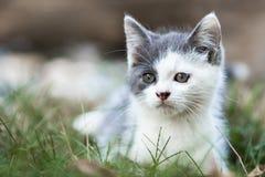 Милый серый котенок стоковые фотографии rf