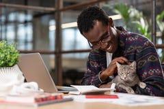 Милый серый кот отвлекая работники от работы стоковая фотография