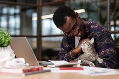 Милый серый кот сидя в своих руках владельцев стоковые изображения rf