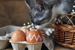 Милый серый маленький котенок в плетеной корзине и пасхальные яйца естественного красного цвета с графической картиной белой крас стоковые фото
