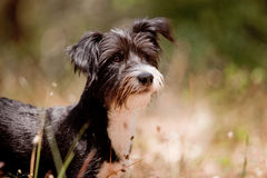Милый смешанный щенок breed Стоковые Фотографии RF