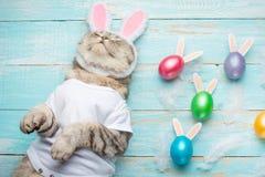 Милый смешной красивый кот с ушами кролика, предпосылка пасхи с яйцами над взглядом предпосылка покрасила вектор тюльпана формы п стоковое изображение