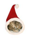 милый спать котенка Стоковая Фотография