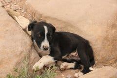 Милый унылый черно-белый щенок красит лож между камнями стоковые фото