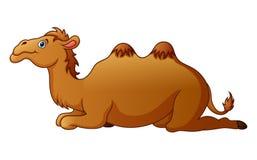 Милый шарж верблюда Стоковое Изображение RF