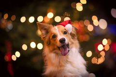 милый шлем santa собаки стоковые фото