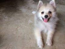 Милый щенок на поле стоковое фото