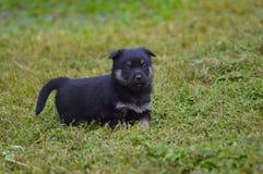 Милый щенок на траве стоковые изображения