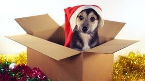 Милый щенок сидит в подарочной коробке с украшениями рождества и Нового Года Стоковые Фотографии RF