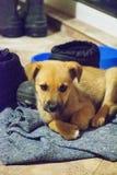 Милый щенок смотря камеру, крупный план, селективный фокус Щенок - портрет милого щенка стоковые фото