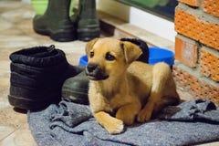 Милый щенок смотря камеру, крупный план, селективный фокус Щенок - портрет милого щенка стоковая фотография