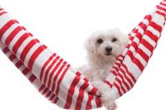милый щенок собаки ослабляя Стоковая Фотография