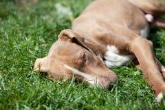 милый щенок Стоковая Фотография RF