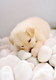 милый щенок Стоковые Изображения