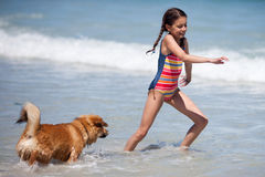 Милый щенок Elo бежит в море после милой девушки Стоковые Фото