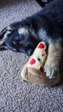 Милый щенок Shepard немца стоковое фото rf