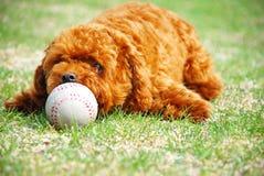 милый doggie Стоковые Фото