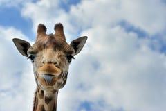 милый giraffe стоковое фото