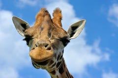 милый giraffe стоковые изображения