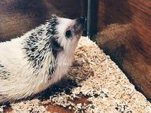 милый hedgehog стоковое фото