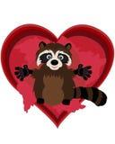 милый raccoon Стоковое Фото
