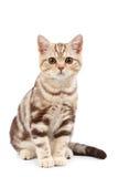 милый tabby котенка стоковая фотография rf