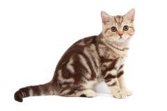 милый tabby котенка стоковое изображение rf