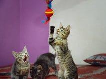 3 милых серых котят играют с игрушкой стоковое фото rf