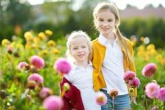 2 милых сестры играя в blossoming поле георгина Дети выбирая свежие цветки в луге георгина на солнечный летний день Стоковое Изображение RF