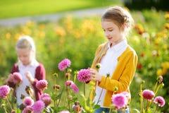 2 милых сестры играя в blossoming поле георгина Дети выбирая свежие цветки в луге георгина на солнечный летний день стоковая фотография