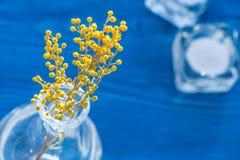 Мимоза на деревянной предпосылке в стеклянной насмешке вазы вверх Стоковое Фото