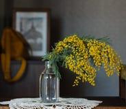 Мимоза цветков весны желтая Стоковое Изображение